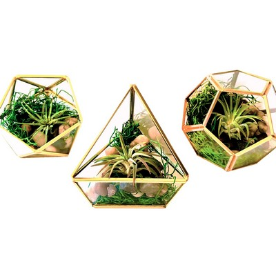 Air Plants in Geometric Glass Terrarium