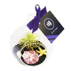 Air Plant Black Sand Terrarium Kit