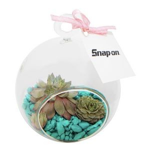 Succulent Terrarium Kit with Caribbean Blue Rocks