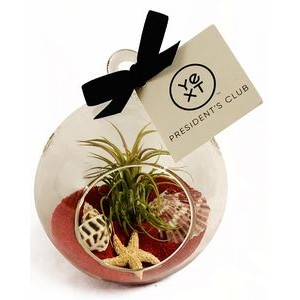 Air Plant Red Sand Terrarium Kit