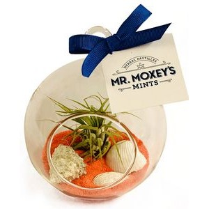 Air Plant Orange Sand Terrarium Kit