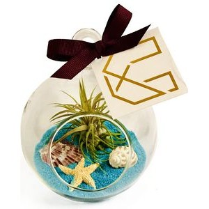 Air Plant Blue Sand Terrarium Kit