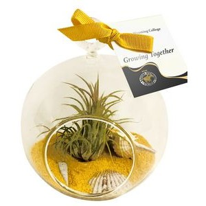 Air Plant Yellow Sand Terrarium Kit